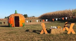 Celebrate All Things Pumpkin At The Maryland Pumpkin Festival