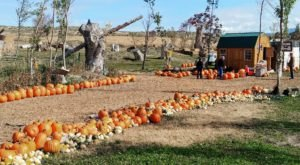 Visit Halloween Land At Twin Oaks Farms In Idaho This Year For A Wholesome Family Outing