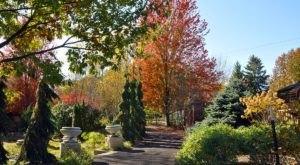 Enjoy A Colorful Autumn Walk Through Reiman Gardens In Iowa This Season