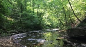 7 Of The Greatest Hiking Trails In Nashville For Beginners