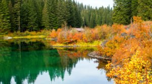 For Some Of The Most Spectacular Fall Foliage In Oregon, Hike The Clear Lake Trail This Season