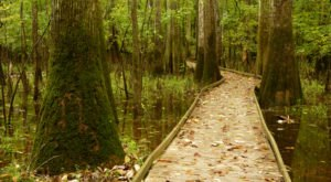 Hike The Boardwalk To Nowhere At Congaree National Park In South Carolina For A Magical Woodland Adventure