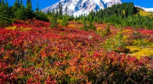 9 Views That Prove Fall Is The Best Time To Visit Mt Rainier National Park In Washington