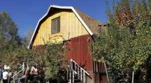 Pick Your Own Apples At Riley's, A Charming Farm Hiding In Southern California
