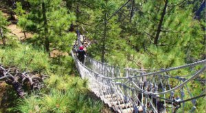 The Treetop Trail At Ziplines At Pacific Crest That Will Show You A New Side Of Southern California