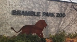 Play With Lemurs At Bramble Park Zoo In South Dakota For An Adorable Adventure