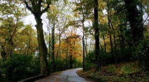 Percy Warner Park Is The Most Peaceful Place To Experience Fall Foliage In Nashville