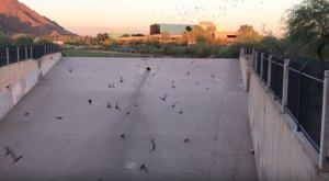 Watch 28 Different Bat Species Emerge From Beneath A Tunnel In Phoenix, Arizona
