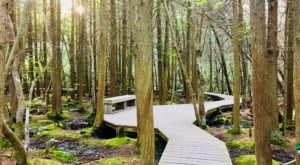 Atlantic White Cedar Swamp Trail In Massachusetts Leads To Incredibly Scenic Views