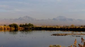 Watch Birds Take Flight When You Stroll Through The Henderson Bird Viewing Preserve In Nevada