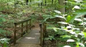 There Are 5 Beautiful Trails Hiding In Delaware's Alapocas Run State Park