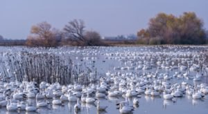 Over One Million Birds Have Arrived At Sacramento National Wildlife Refuge In Northern California This Month