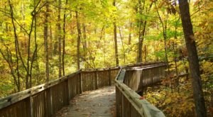 Take A Hike On The Talmadge Butler Boardwalk Trail To Experience Alabama's Beautiful Fall Colors