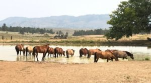 The Black Hills Wild Horse Sanctuary Is Worthy Of A South Dakota Pilgrimage This Fall