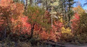 Hike Through An Enchanting Maple Grove On West Fork Trail In Arizona