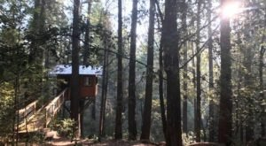 Sleep Underneath The Forest Canopy At This Cozy Treehouse In Northern California