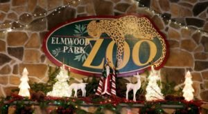 Your Whole Family Can Enjoy Eating A Brunch Buffet With Santa At The Elmwood Park Zoo In Pennsylvania