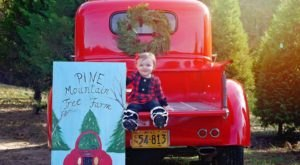 Search For The Perfect Tree With The Whole Family At Pine Mountain Tree Farm In Mississippi