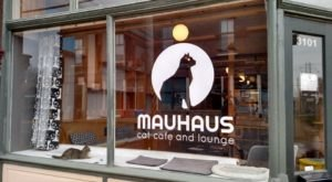 Mauhaus Cat Café & Lounge Is A Completely Cat-Themed Catopia Of A Cafe In Missouri