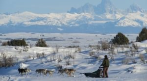Take A Sled Dog Adventure With Silver Sage Mushing In Idaho For A Ride Of A Lifetime