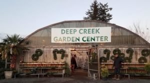 For Uniquely Colorful Christmas Trees, Head To Deep Creek Garden Center In Oregon