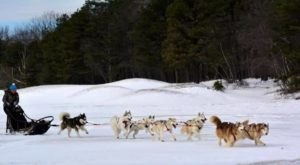 Take A Sled Dog Adventure At Arctic Paws Dog Sled Tours In Pennsylvania For A Ride Of A Lifetime