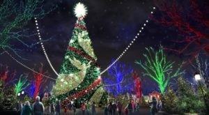 At 80 Feet Tall, The Biggest Christmas Tree In The U.S. Is Coming To Missouri For Your Family To Enjoy