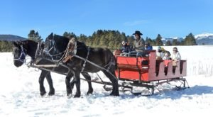 The Nancy Burch's Roadrunner Tours Enchanting Sleigh Ride Takes You Through A Winter Wonderland In New Mexico