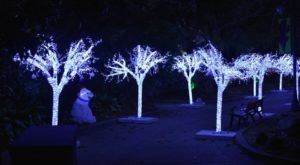 The Hattiesburg Zoo In Mississippi Is Decked Out In Thousands Of Glittering Lights For Your Holiday Enjoyment