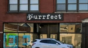 Purrfect Cafe And Gallery Is A Completely Cat-Themed Catopia Of A Cafe In Buffalo