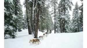 Take A Sled Dog Adventure At Oregon Trail Of Dreams For The Ride Of A Lifetime