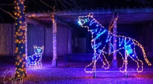 The Wisconsin Zoo Is Decked Out In Thousands Of Glittering Lights For Your Holiday Enjoyment