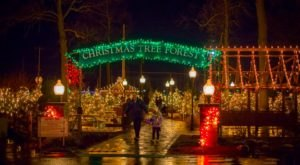 The Christmas Tree Trail In Hamburg Is Like Walking In A New York Winter Wonderland
