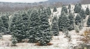 The Christmas Tree Trail In Bethlehem Is Like Walking In A New Hampshire Winter Wonderland