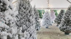 For Uniquely Colorful Christmas Trees, Head To Rudolph's Christmas Trees In Nevada