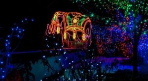 The Denver Zoo In Colorado Is Decked Out In Thousands Of Glittering Lights For Your Holiday Enjoyment