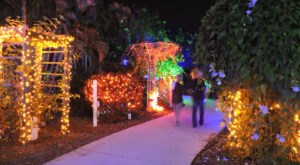 The Garden Christmas Light Display At Florida Botanical Gardens Is Pure Holiday Magic