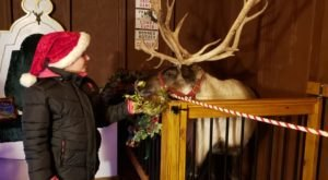 This Reindeer Farm Near Pittsburgh Will Positively Enchant You This Season