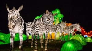 There's A Chinese Lantern Festival Coming To New York And It's Downright Magical
