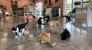 Purr Catfe Is A Completely Cat-Themed Catopia Of A Cafe In Arkansas