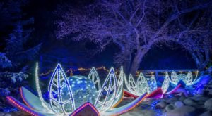 Winter Lights In Minnesota Is A Magical Wintertime Fairyland Experience