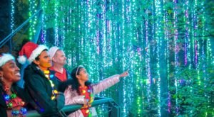 The Garden Christmas Light Displays At Atlanta Botanical Garden In Georgia Is Pure Holiday Magic