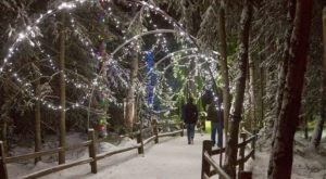 Banish The Winter Darkness At The Holiday Themed Zoo Lights In Alaska