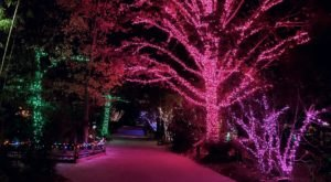 Adventure Through An Enchanted Wonderland Of Lights And Activities At Riverbanks Zoo In South Carolina