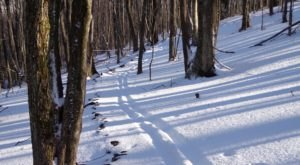 The Easy Snowshoe Trail At Elk Knob State Park In North Carolina Is Ideal For A Bright And Snowy Winter's Day