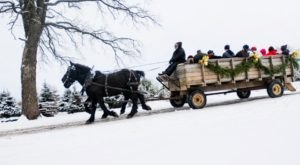 Take A Sleigh Ride Through An Idyllic Christmas Tree Farm At Oney's Tree Farm In Illinois