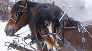 The Winter Carriage Rides At Gervasi Vineyard Are A Trip Through A Snow-Covered Wonderland