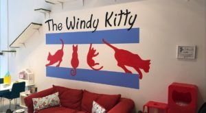 Windy Kitty Cat Cafe Is A Completely Cat-Themed Catopia Of A Cafe In Illinois