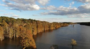 Enjoy Stunning Fall Foliage And Wildlife When You Take The 1.5-Mile Stumpy Lake Loop In Virginia Beach
