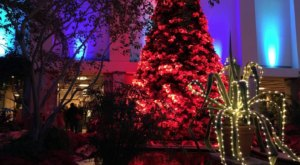 The Poinsettia Tree In Nebraska Is One Of The Most Unusual Christmas Trees In The Nation